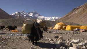 《西藏微纪录》—珠峰脚下的牦牛