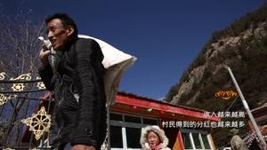 《西藏微纪录》—章巴村的农牧民合作社新版