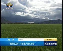 """""""藏青2000""""4年增产近6万吨"""