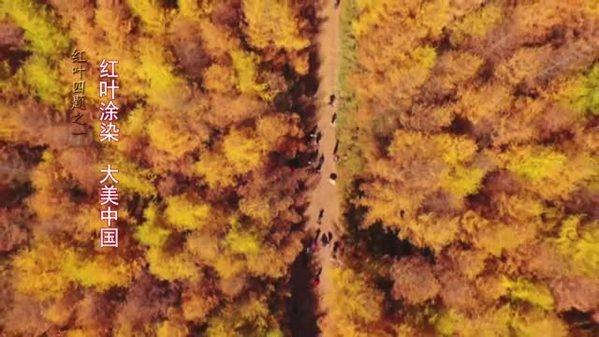 红叶四题之一:红叶涂染 大美中国