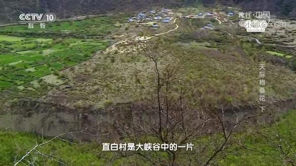 《地理中国》秘境寻踪·天际格桑花(下)