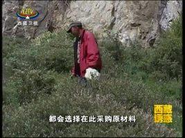 [西藏诱惑]药王谷介绍