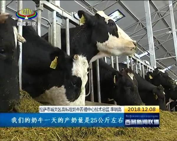 牦牛育肥牧业增效拓宽致富路