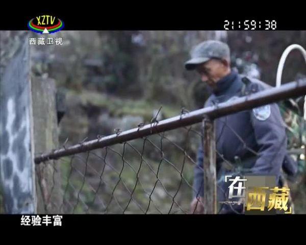 【在西藏】格桑老人巡山记