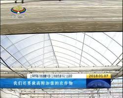 江孜县:藏红花开出产业脱贫新模式