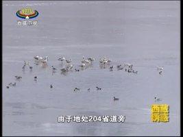 [西藏诱惑]多庆措的候鸟乐园