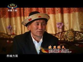 [西藏诱惑]西藏特有的藏香猪
