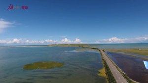 记者探访青海湖关停景区 鸟翔鱼跃 生态向好