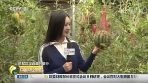 【脱贫攻坚西藏阿里行】噶尔县:投建生态大棚解决吃菜就业难