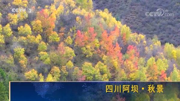 四川阿坝·秋景