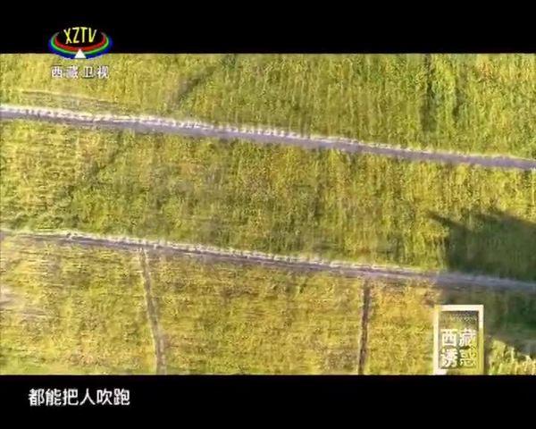《西藏诱惑》为了高原的这抹绿(上集)