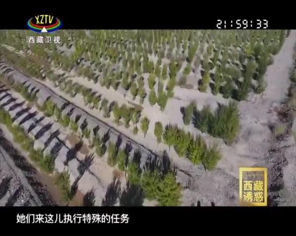 《西藏诱惑》为了高原的这抹绿(下集)