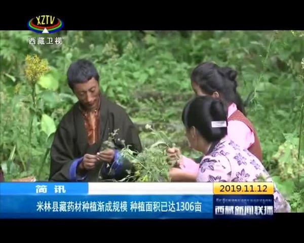 西藏米林县藏药材种植渐成规模 种植面积已达1306亩