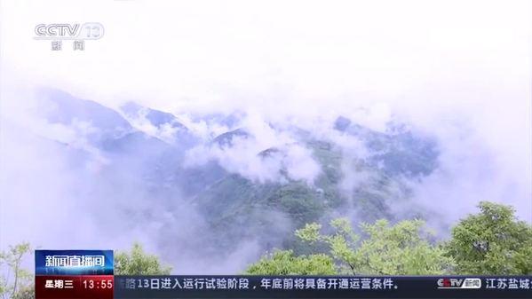 四川阿坝自然保护区拍到熊猫、金丝猴影像