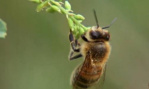 《致富经》青藏高原养蜂人