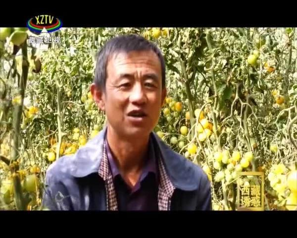 《西藏诱惑》绿色的田野