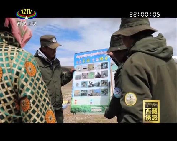《西藏诱惑》羌塘保护区的守护者