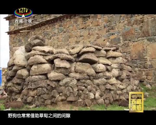 《西藏诱惑》普玛江塘变身记