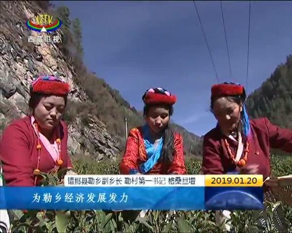 """西藏勒乡茶厂""""变形记"""" 致富路上的金叶子"""