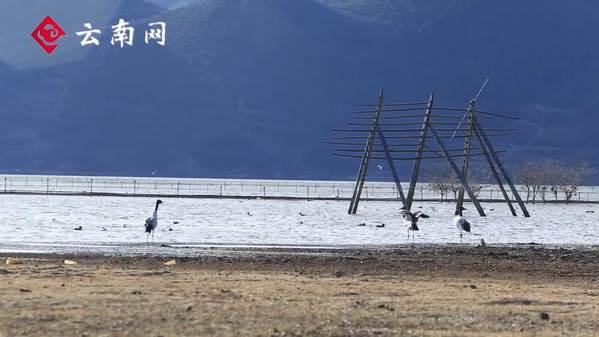 云南香格里拉举行冬季国际观鸟节