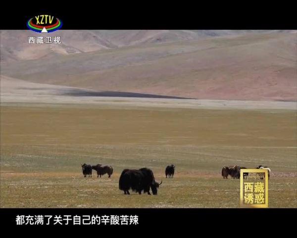 《西藏诱惑》追逐幸福的双湖人