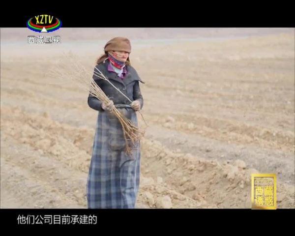 《西藏诱惑》年楚河——绿色家园