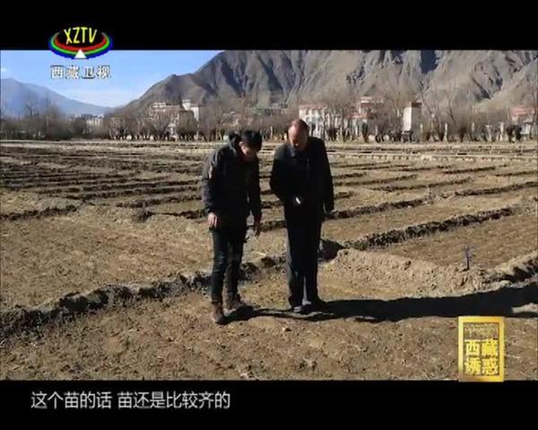 《西藏诱惑》年楚河——河谷粮仓