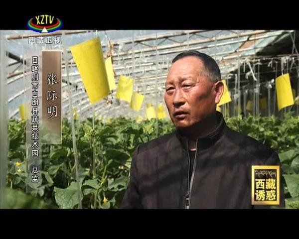 《西藏诱惑》年楚河——白朗人的绿宝盆
