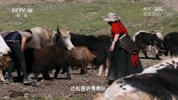 《地理中国》奇居胜境·江源生灵