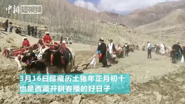 """西藏各地共迎传统""""开耕节"""""""