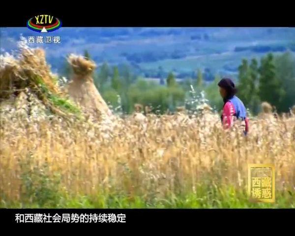 《西藏诱惑》 热土(下)
