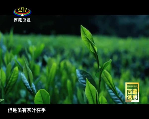 《西藏诱惑》高原茶话·溯源