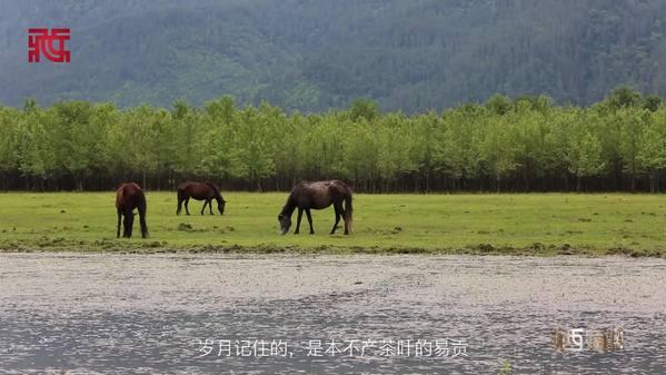 光影西藏丨易贡茶 易贡人