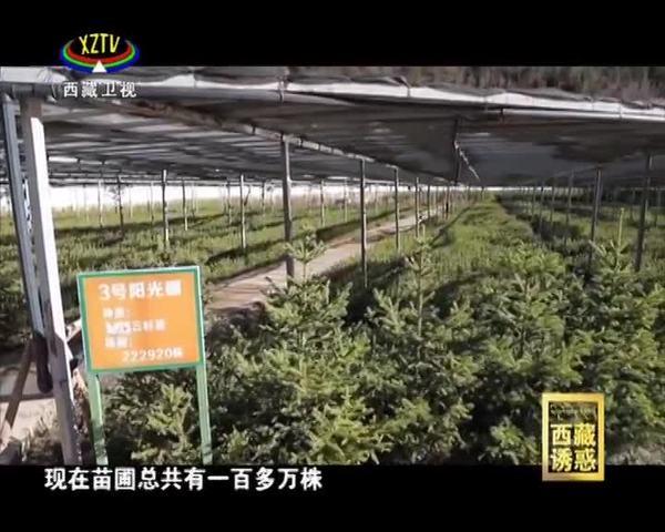 《西藏诱惑》绿色江达