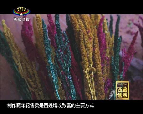 《西藏诱惑》美丽桑木村