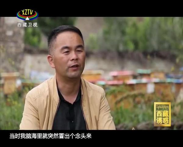 《西藏诱惑》我在西藏的汉藏情缘