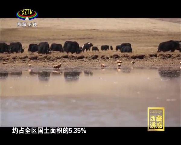 《西藏诱惑》野性贡觉