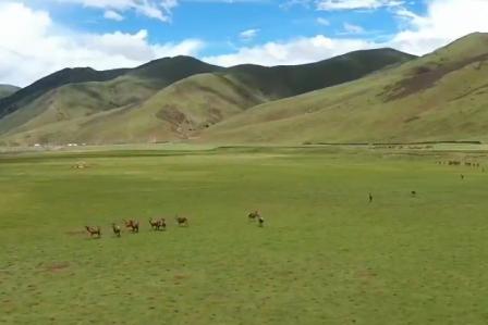 《远方的家》西藏类乌齐马鹿国家级自然保护区:高原之上 马鹿的家
