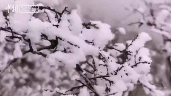 """四川松潘""""雪山梁""""上观""""雪宝顶"""" 风起云涌"""