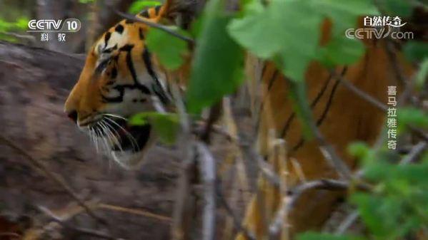 《自然传奇》喜马拉雅传奇