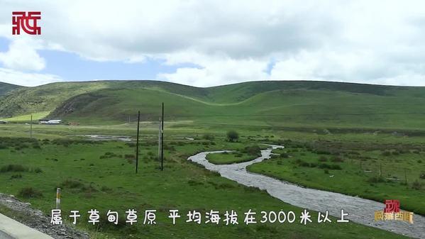 【Vlog•元元探甘南】行驶国道213线穿越桑科草原