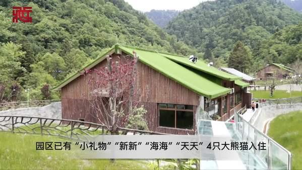 甲勿海大熊猫保护研究园——大熊猫 小乐园
