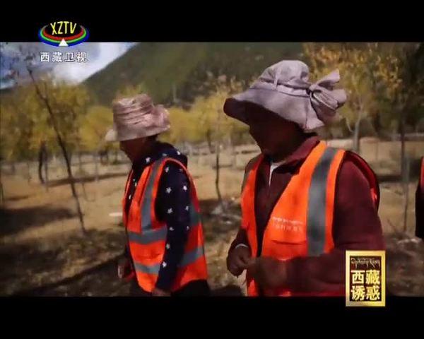 《西藏诱惑》青山绿水幸福路