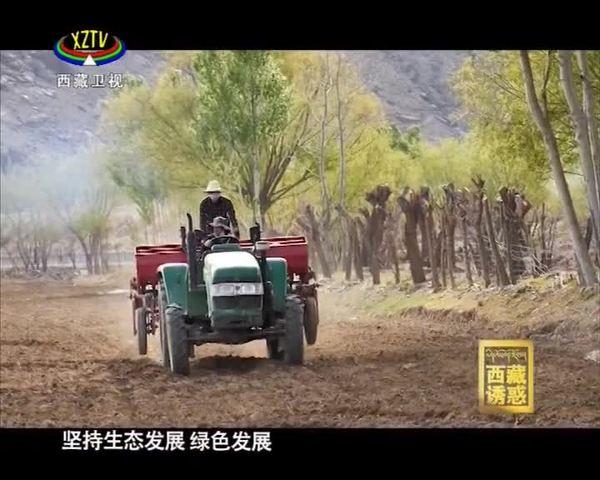 《西藏诱惑》白堆村的绿色发展之路
