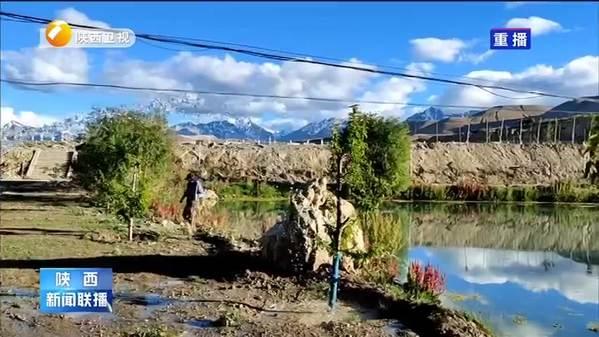 【阿里我们的故事】秦岭苗木在阿里扎根