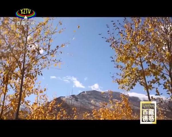 《西藏诱惑》创业故事