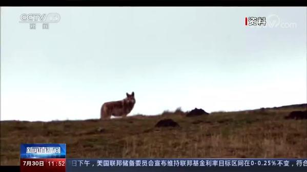 全国首个狼生态保护监测站落户四川若尔盖