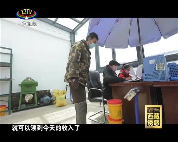 《西藏诱惑》高原牧区新生活