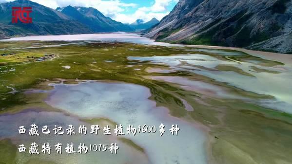 带你走进西藏 感受生物多样性之美