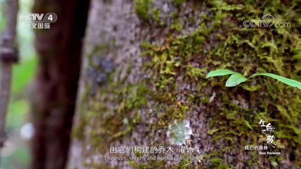 《生命之歌》第3集 我们的森林
